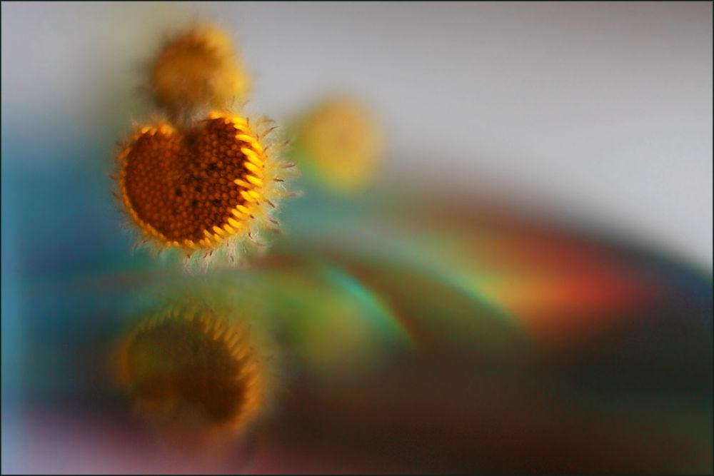 Photo in Macro #macro #flower #herb #haiku #haiga