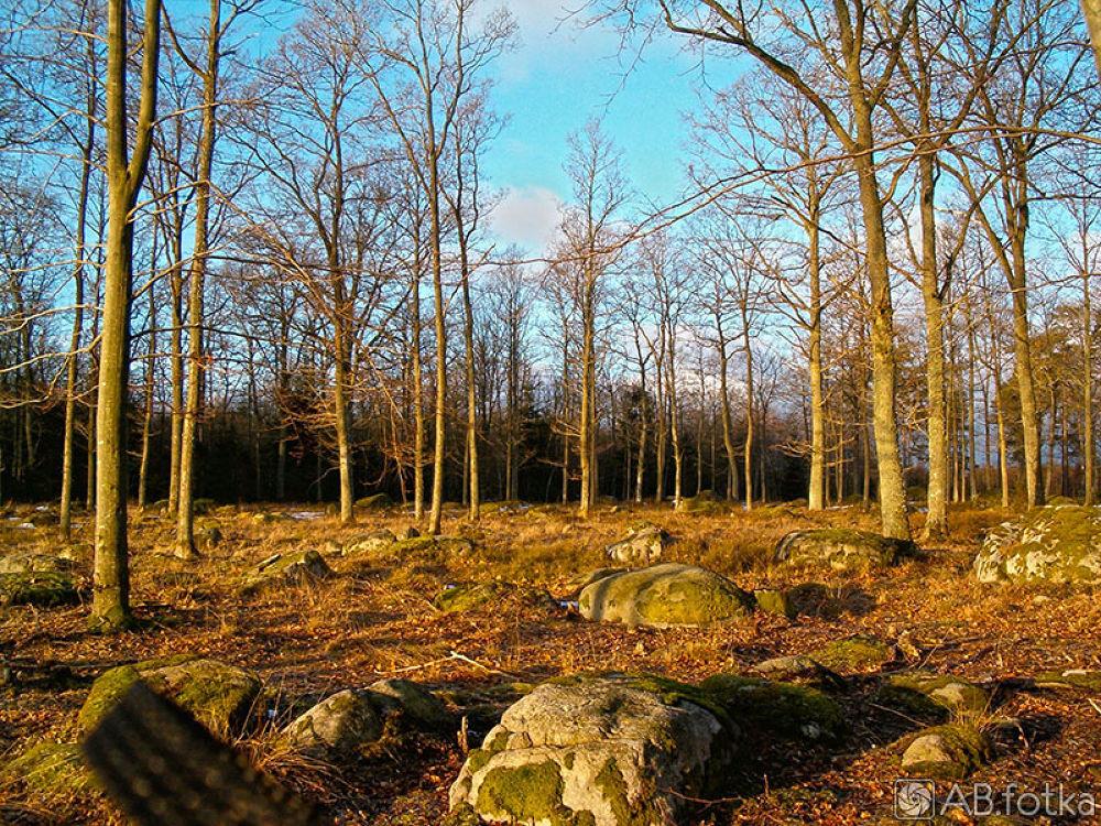 Photo in Landscape #sunrise #trees #landscape #sun #morning #spring #color #sweden