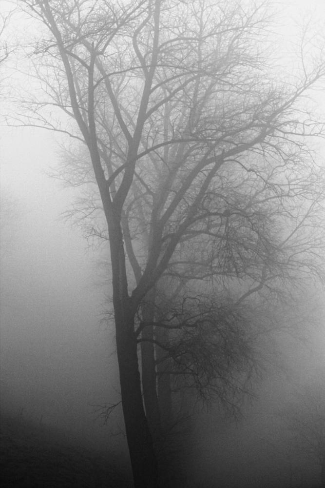 Photo in Nature #fog #trees #sluis #pepperfarm