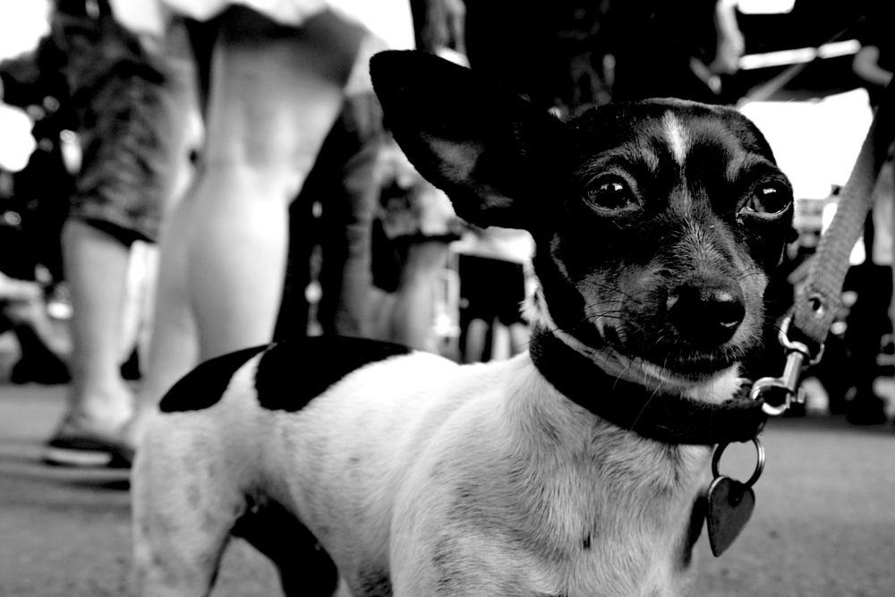 Photo in Animal #perro #palermo #argentina