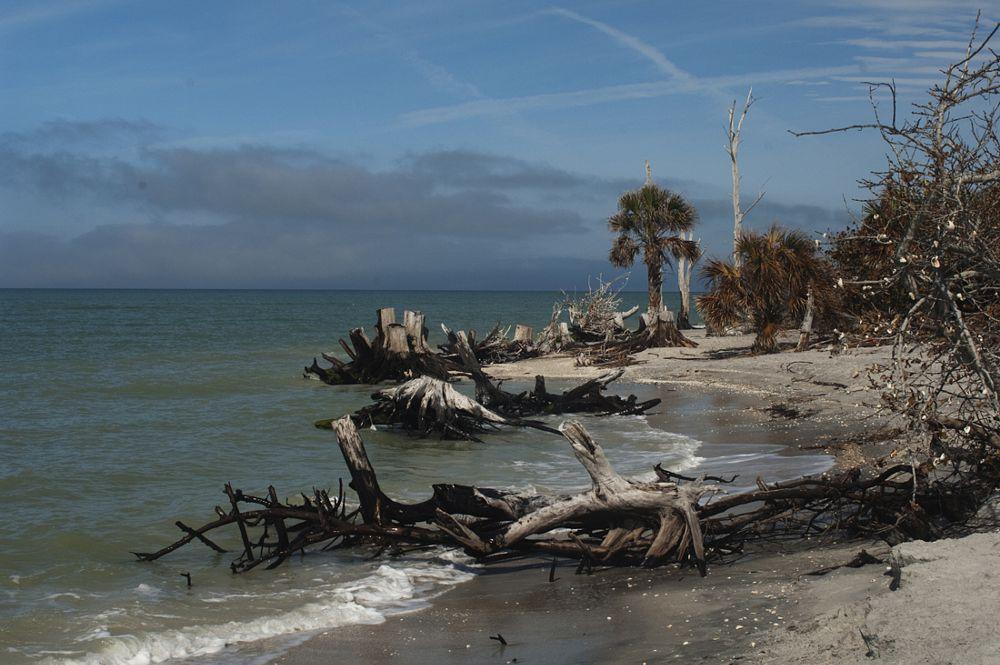 Photo in Landscape #florida landscapes #florida gulf coast