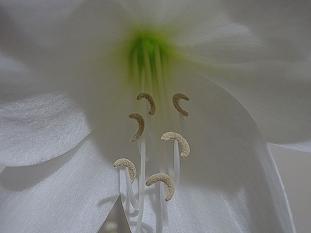 Photo in Macro #flower #inside #white