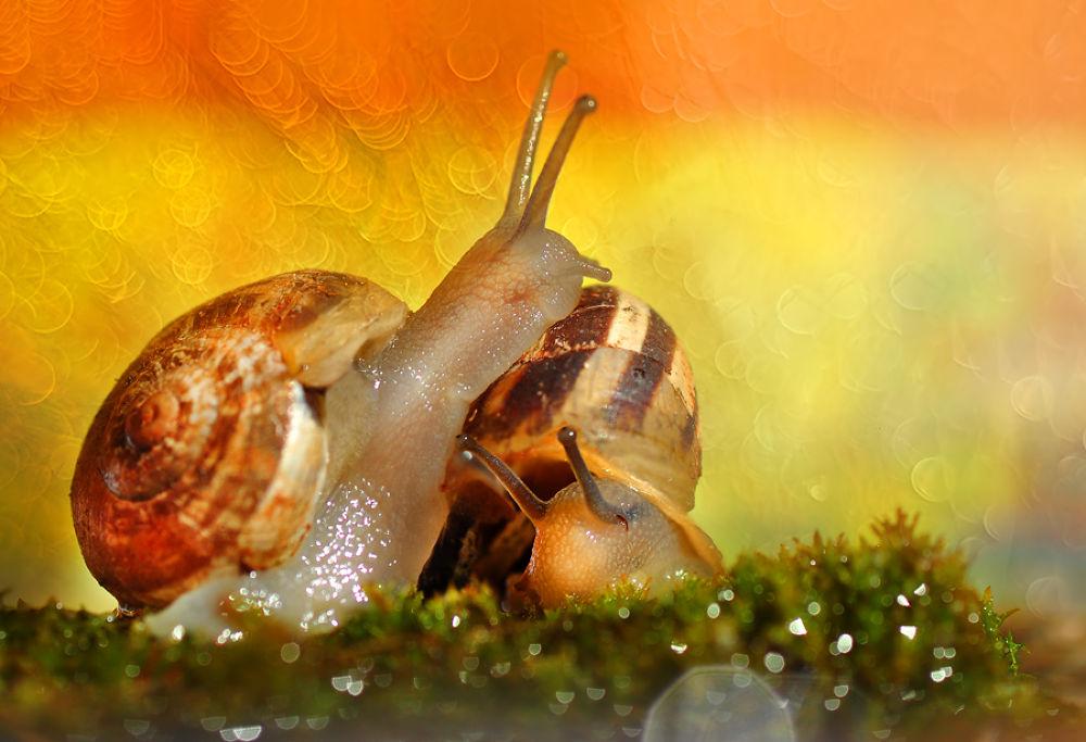 Photo in Random #macro #animal #snail