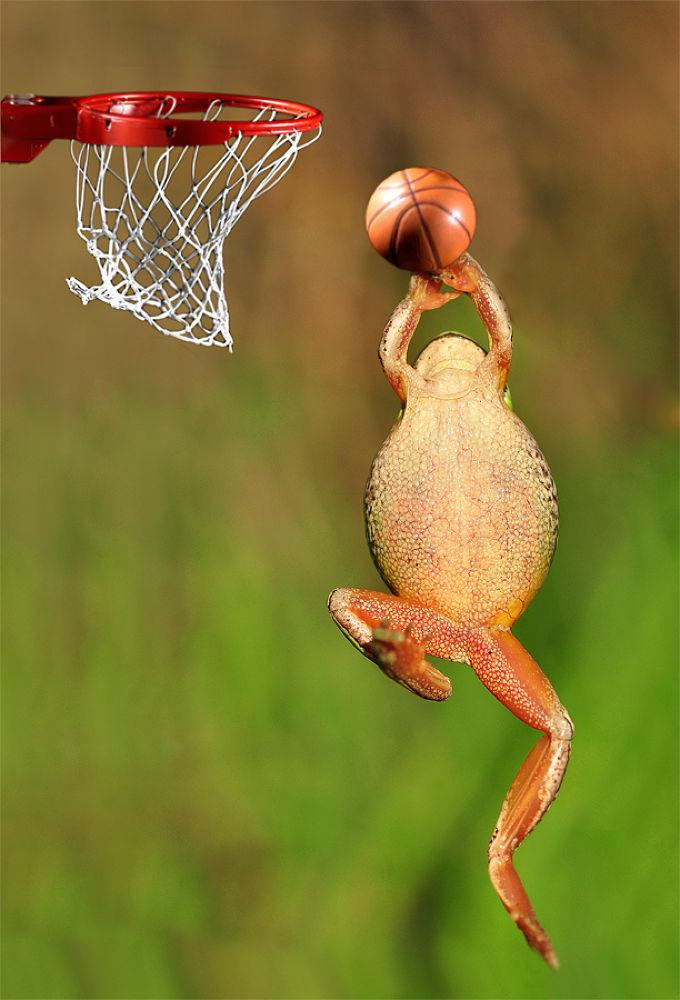 Photo in Macro #macro #treefrog #animal