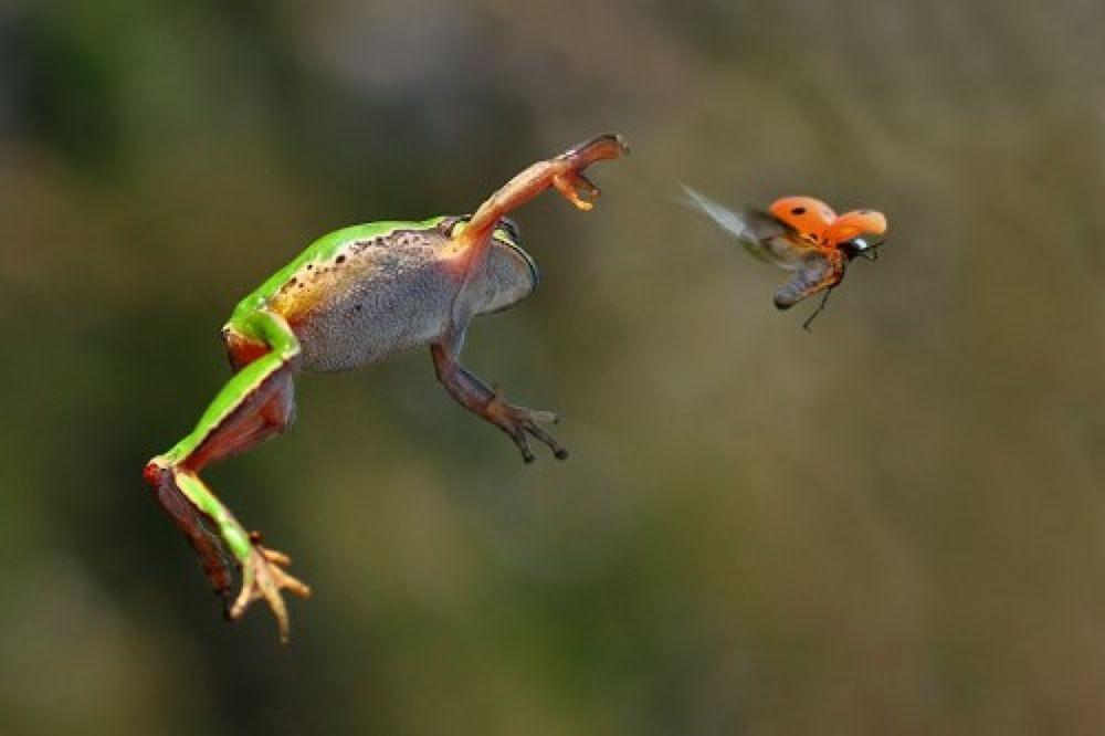 Photo in Macro #treefrog #macro #animal #ladybug
