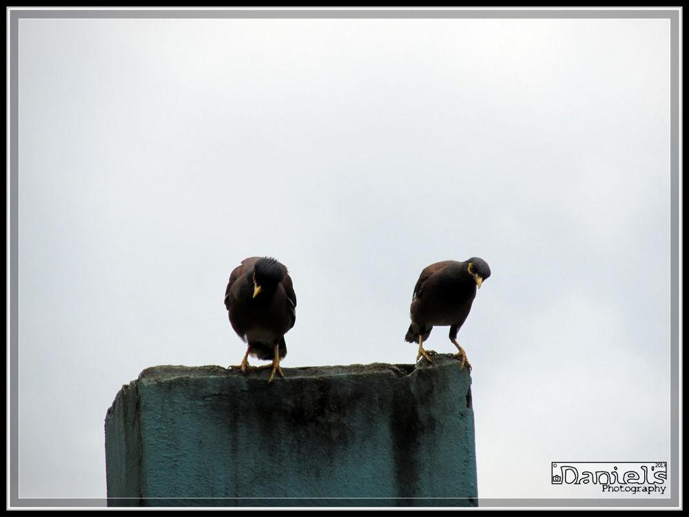 Photo in Nature #bird #bangladesh #urban