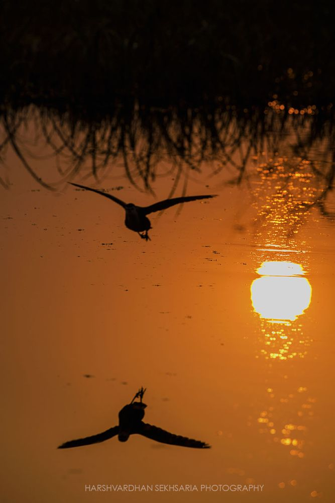 Photo in Fine Art #silhouette #bird #fly #flying #feathers #wings #sunset #sun #orange #water #refection #india #keoladeo national park #bharatpur #nature #national geographic #natgeo