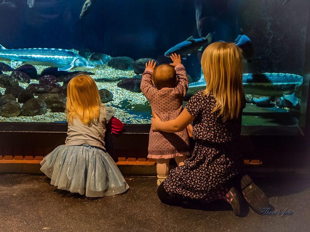 Photo in Family #girls #indoors #no flash #fish #aquarium