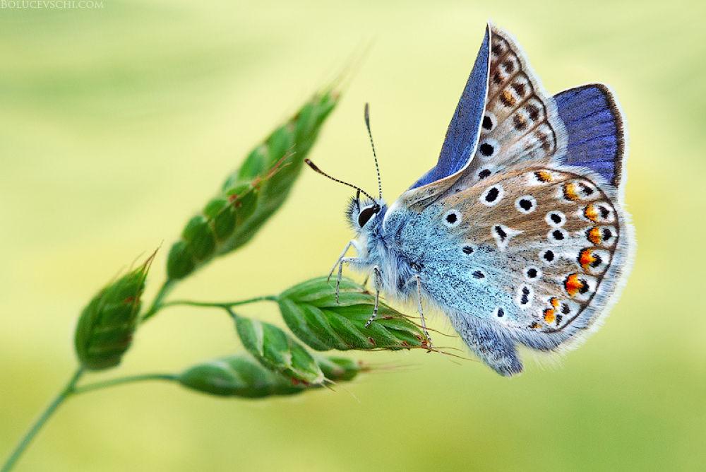 Photo in Random #moldova #nature #macro #photographer #butterfly #ypa2013