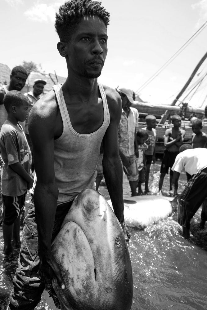Photo in Journalism #shark #fishing #fisherman #boat #ocean #indian #africa #kenya #lamu #tradition #dhaw