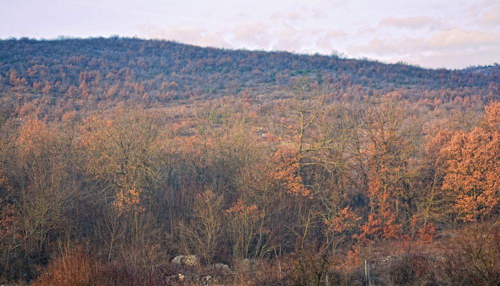 Photo in Landscape #landscape #forest #nature #natur #color