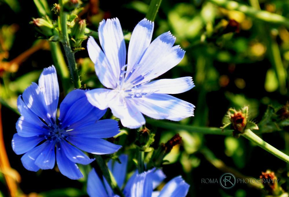 Photo in Macro #flower #flowers #flora #nature #natur #close up #macro