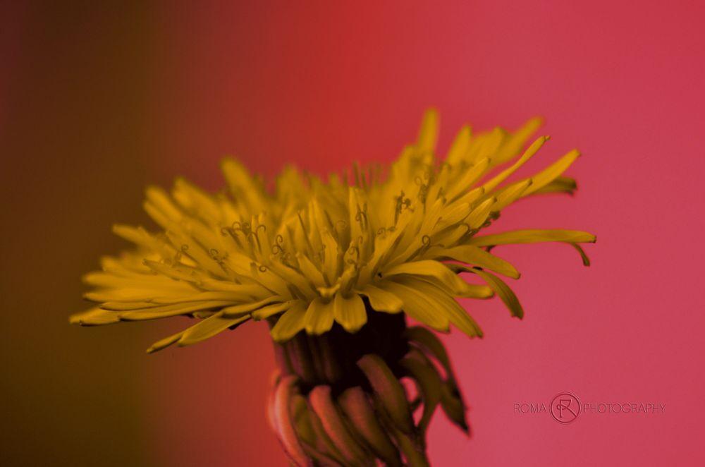 Photo in Macro #flora #nature #natur #close up #flowers #flower #macro
