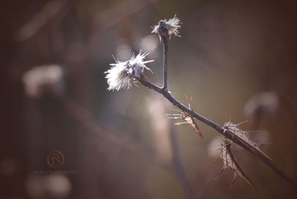 Photo in Nature #flora #nature #natur #winter #close up #macro