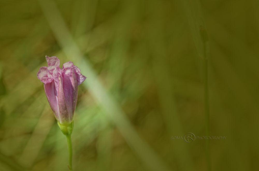 Photo in Nature #flora #wild #nature #close up #flower #bud #macro