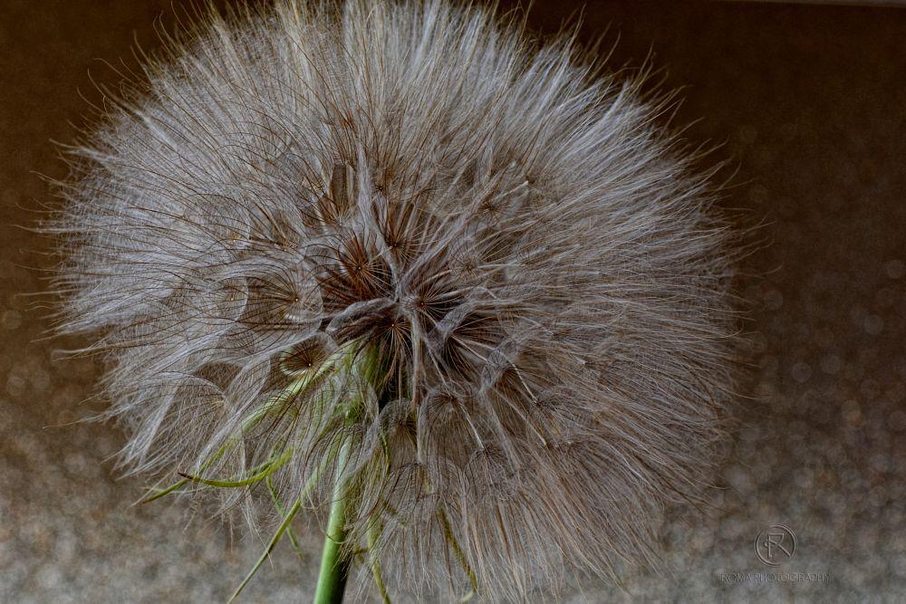 Photo in Macro #flora #nature #close up #macro #seed