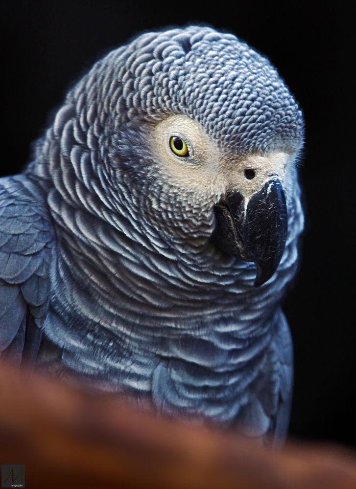 Photo in Animal #africa #morocco #animal #zoo #rabat #nikon #canon #photography