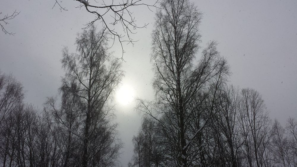 Photo in Nature #nature #winter #tree #sun #clouds