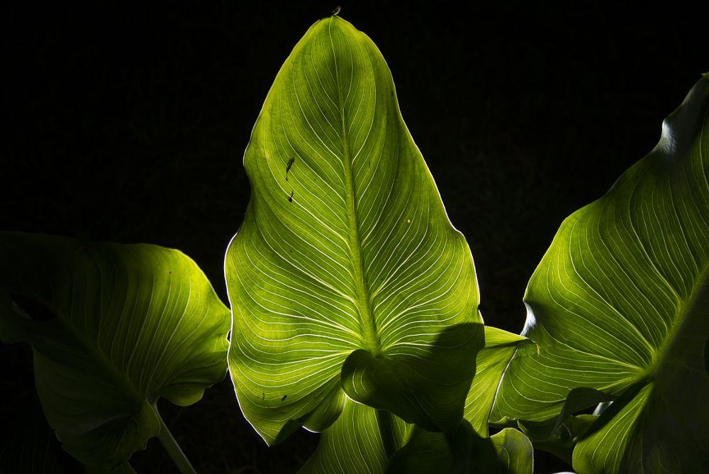 Photo in Nature #hojas naturaleza contraluz