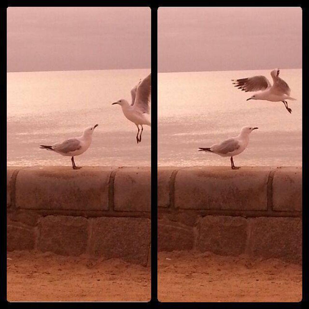 Photo in Random #ypa2013 #seagulls #beach