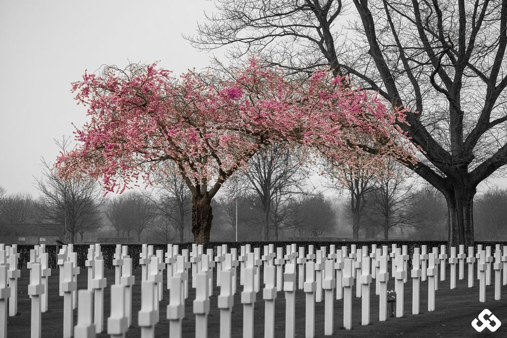 Photo in Landscape #fujifilm #x-t10 #american cemetery #soldiers