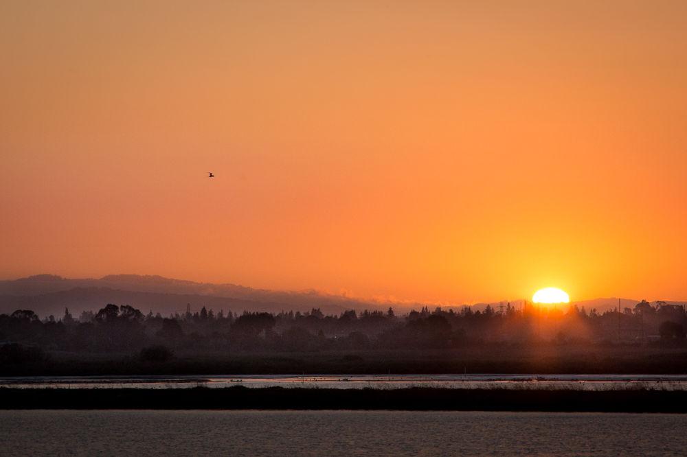 Photo in Landscape #landscape #sunset #twilight #bird #silhouette #orange #california #baylands #water #clouds