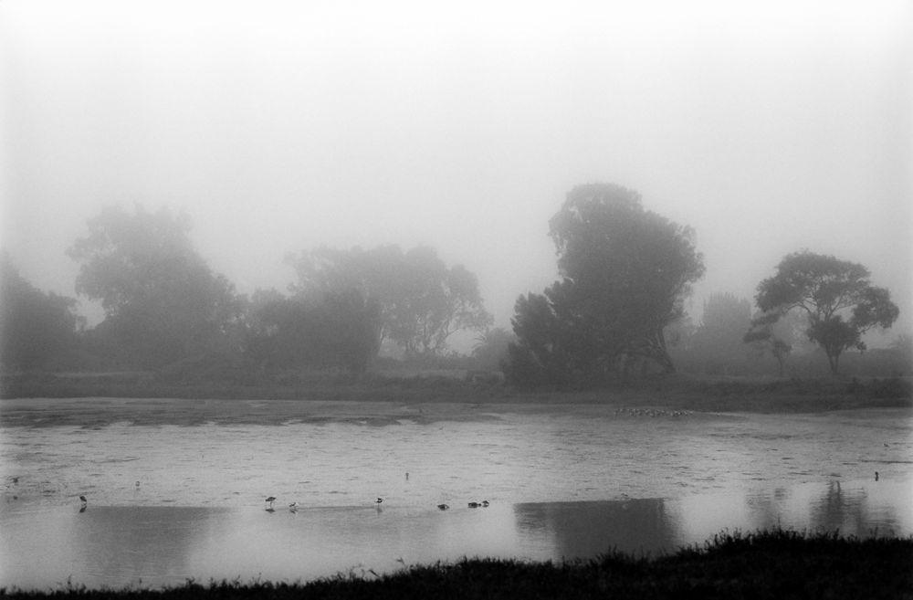 Photo in Landscape #black and white #film photography #tri-x #water #fog #landscape #mud flats #trees #palo alto #san francisco bay #baylands #california #rain #winter #birds #stand development #hc-110