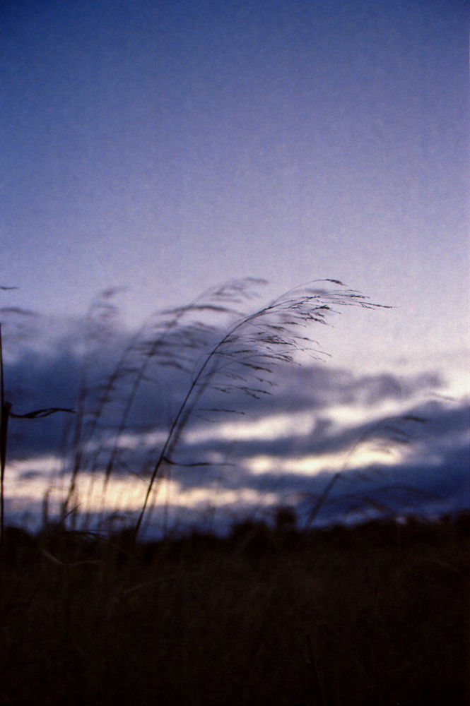 Photo in Landscape #landscape #film photography #kodak #ultramax 400 #wind #winter #nightfall #blue #sky #palo alto #baylands #california #film grain #grass #field #blowing #canon ae-1 #35mm film