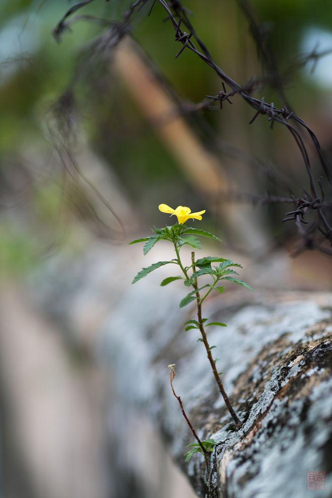 Photo in Macro #yellow #flower #bokeh
