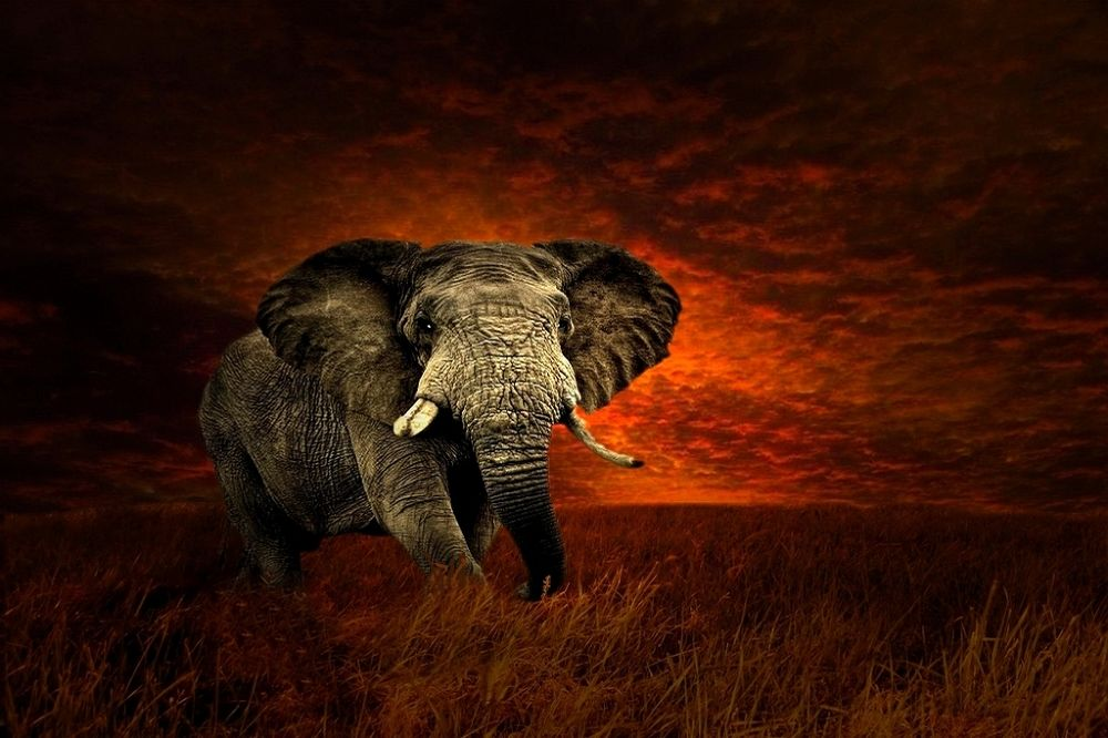 Photo in Animal #sky #red #sunset #elephant #wise