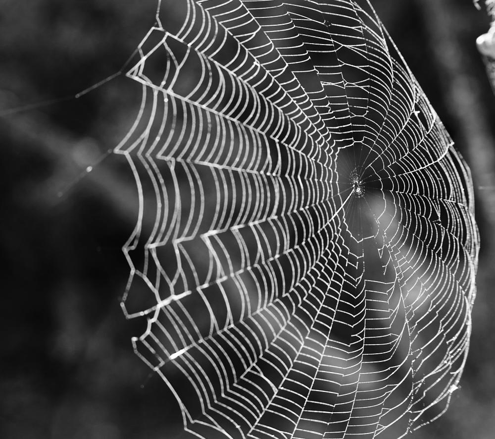 Photo in Black and White #youpic #nature #b&w