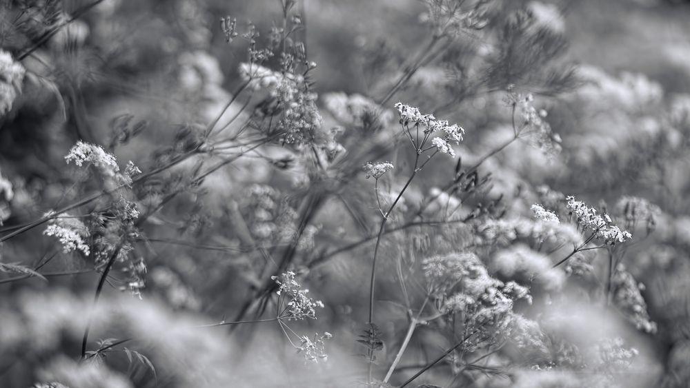 Photo in Black and White #environnement #urbain #nature #fleur #couleurs #filtres #hubert61
