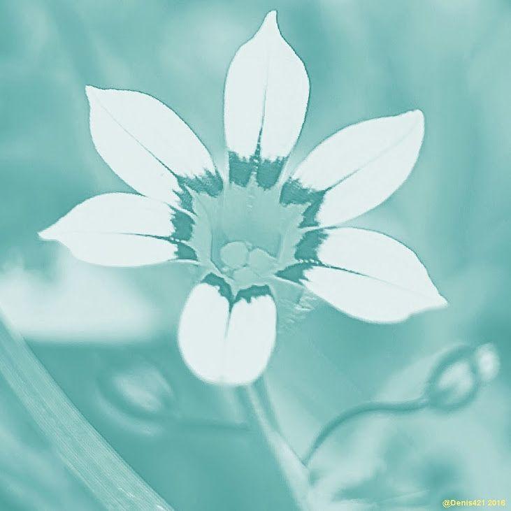 Photo in Fine Art #fine art #reunion island #denis payet #canon user #flower #wild flower
