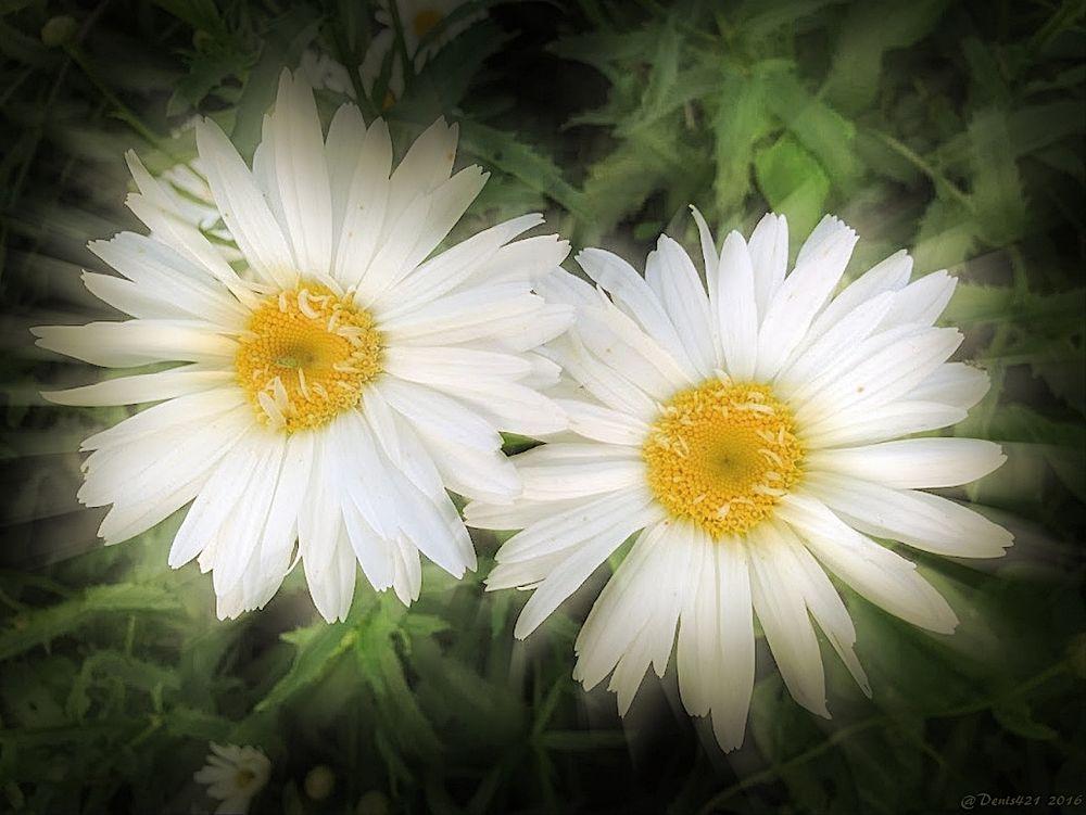 Photo in Fine Art #flower #nature #fine art #reunion island #denis payet #canon user #macro