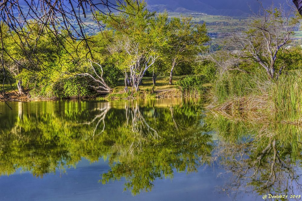 Photo in Landscape #reflection #nature #landscape #reunion island #denis payet #canon user #cover