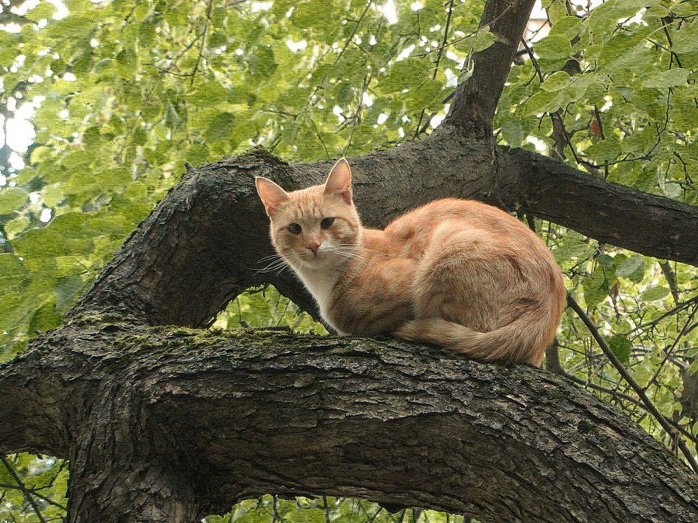 Photo in Animal #orange #ginger #cat