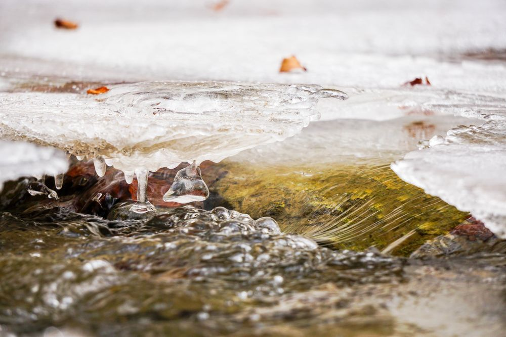 Photo in Macro #nature #winter #water #ice