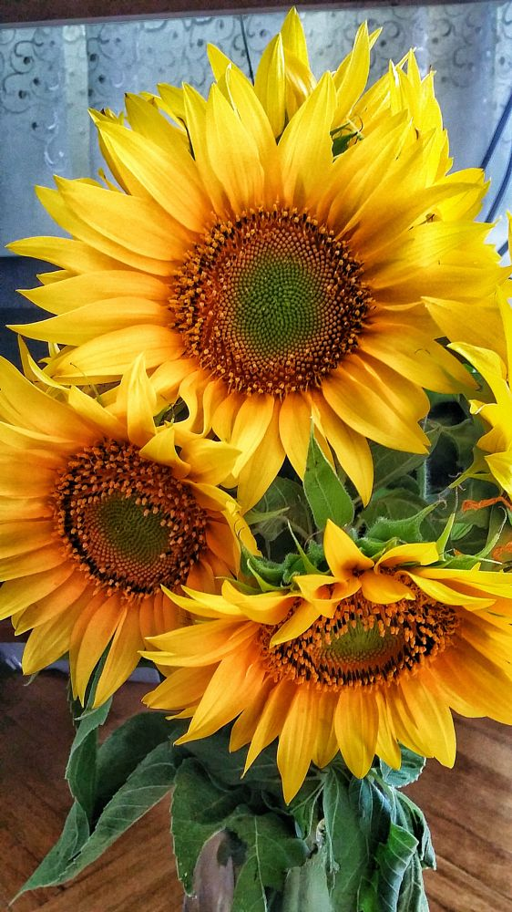 Photo in Nature #nature #sun #flowers