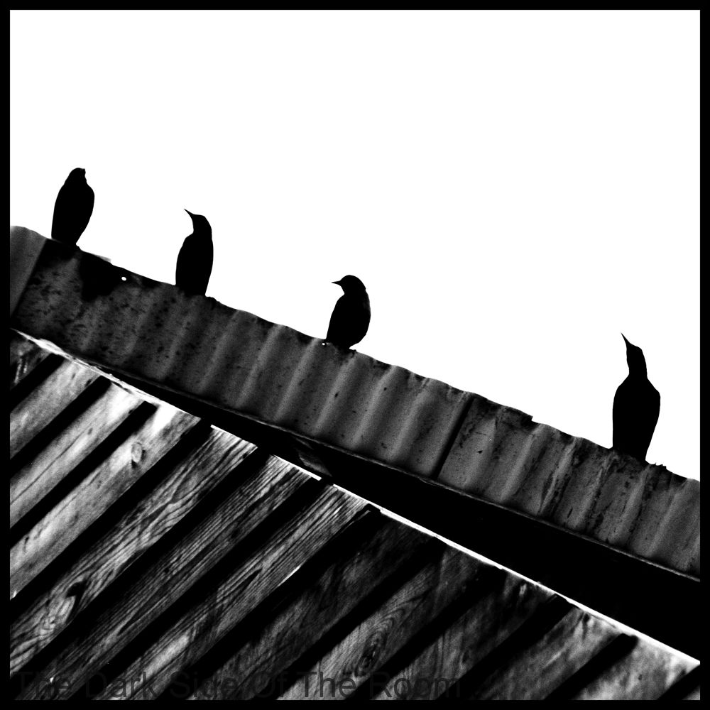Photo in Black and White #birds #black and white #contrast #lines #oiseaux #noir blanc #pajaros #mexico