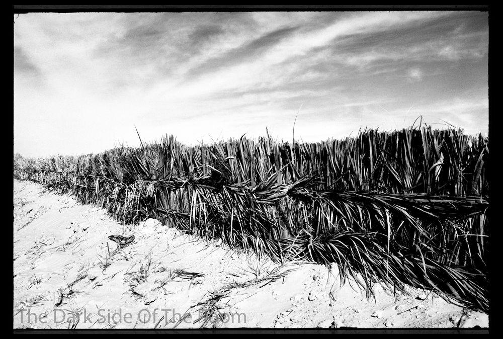Photo in Black and White #tunisia #black and white #desert #sahara #noir blanc #blanco y negro #analogue #argentique #tunes #analoga #desierto #contrast #sable #arena #sand