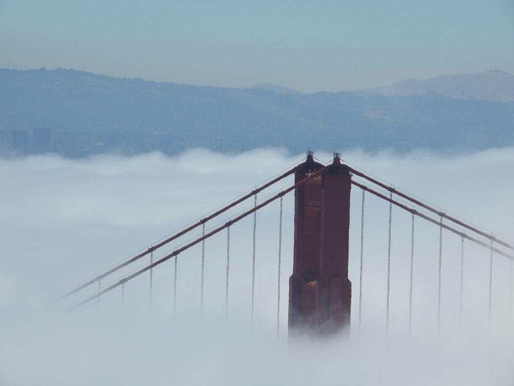 Photo in Nature #ggb #goldengatebridge #nature #fog #sfbay