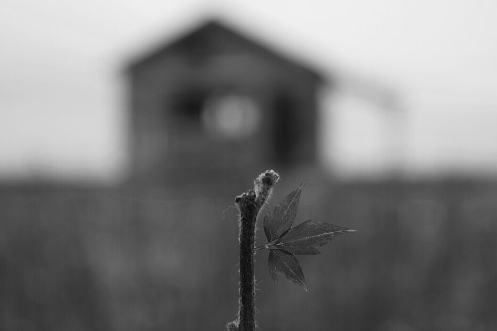 Photo in Black and White #blackandwhite #vintage #abandoned