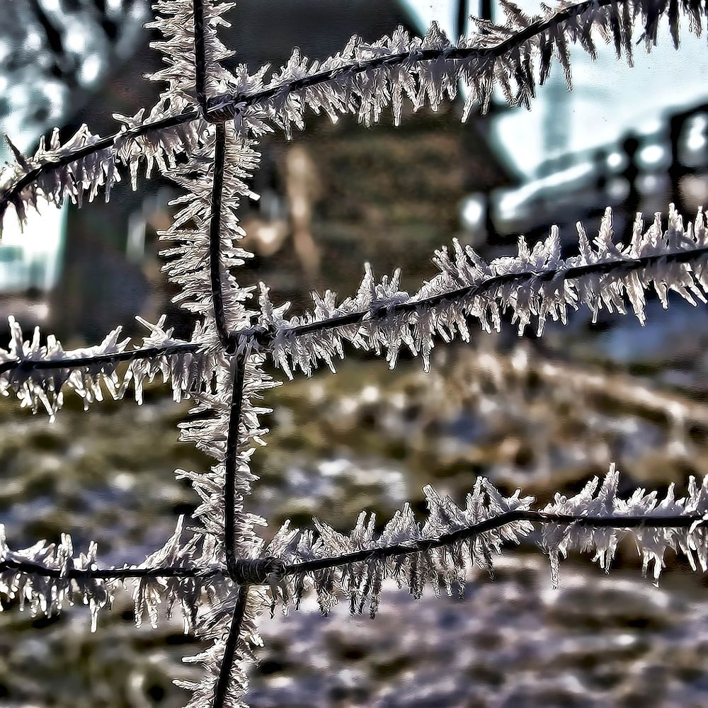 Photo in Random #frost #fence #winter #austria
