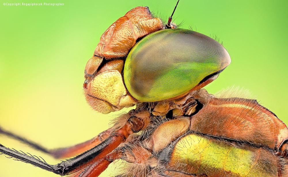 Photo in Macro #macro #dragon fly