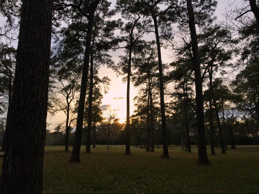Photo in Random #park #trees #sunset