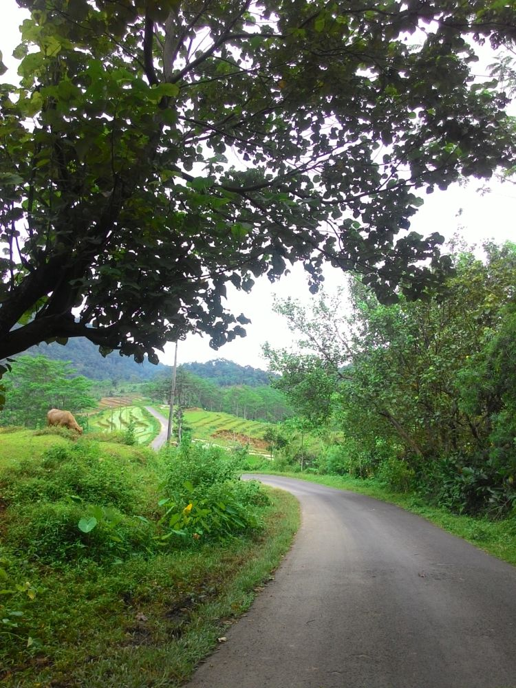 Photo in Travel #roads #nature #travel #kendalindonesia
