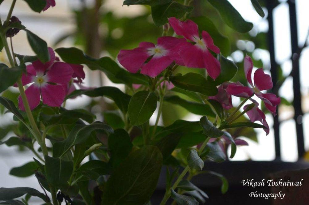 Photo in Nature #flower #nature #garden #love #beauty