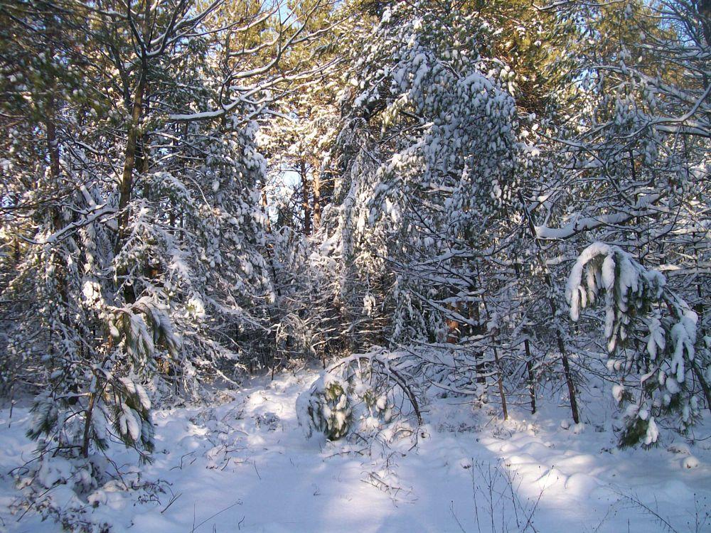 Photo in Landscape #nature #landscape #michigan