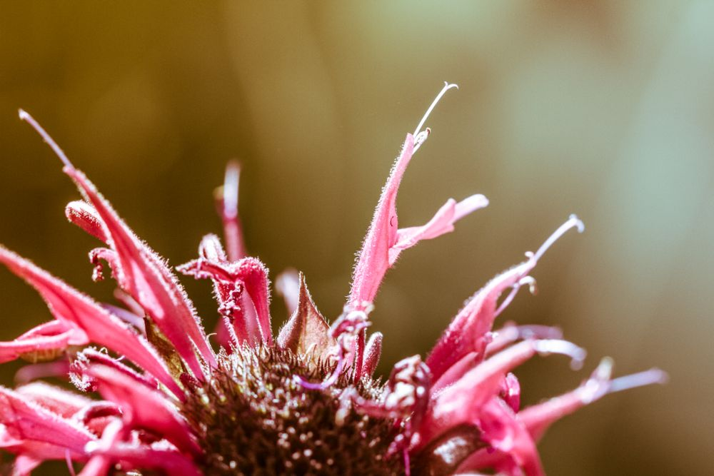 Photo in Nature #flower #nature #macro #sunkissed #fine art #abstract