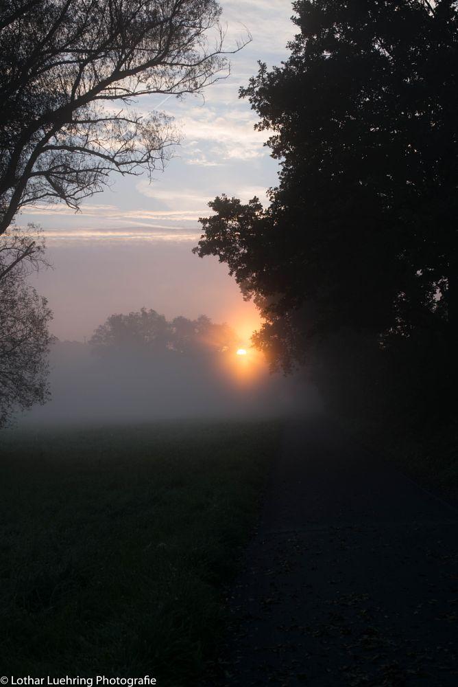 Photo in Landscape #landscape #morning #werdorf